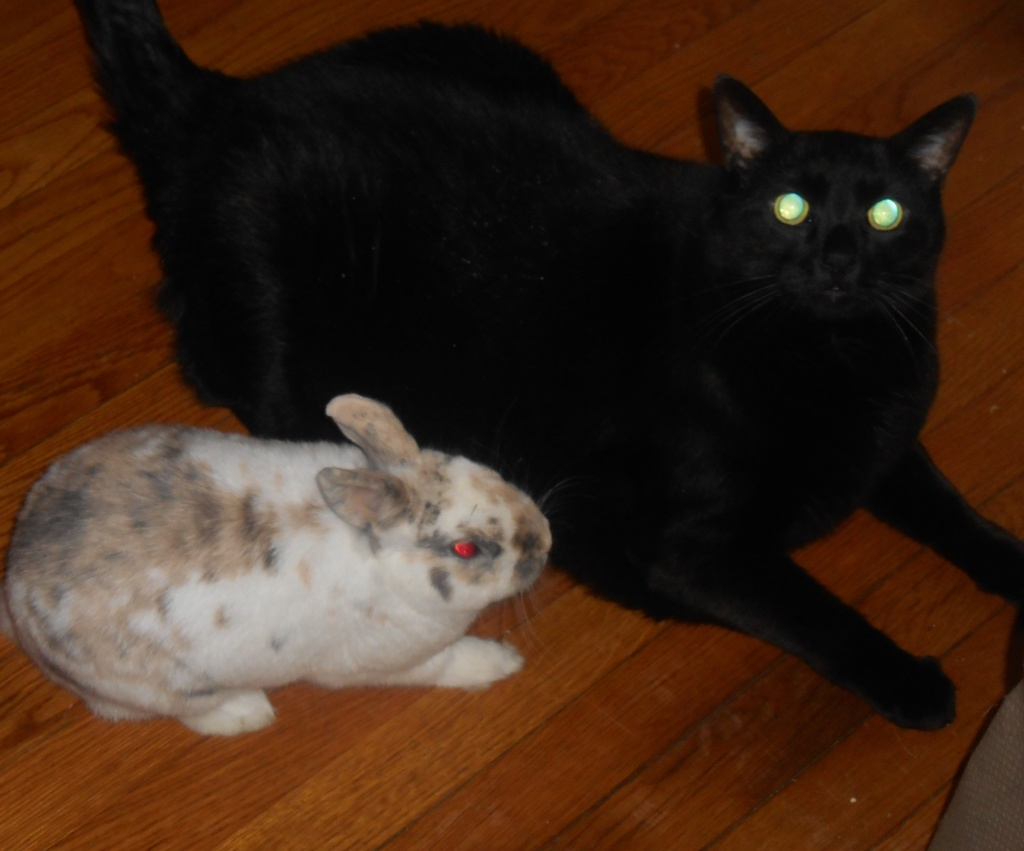 This Will Never be a Blog about a Cat and a Bunny, but…
