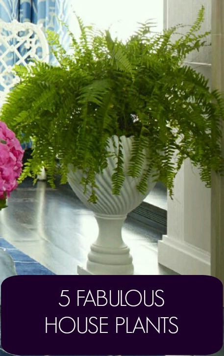 5 Fabulous House Plants