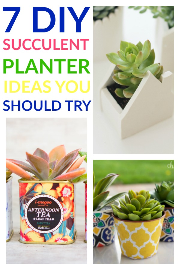 7 Simple & Pretty DIY Succulent Planter Ideas You Should Try