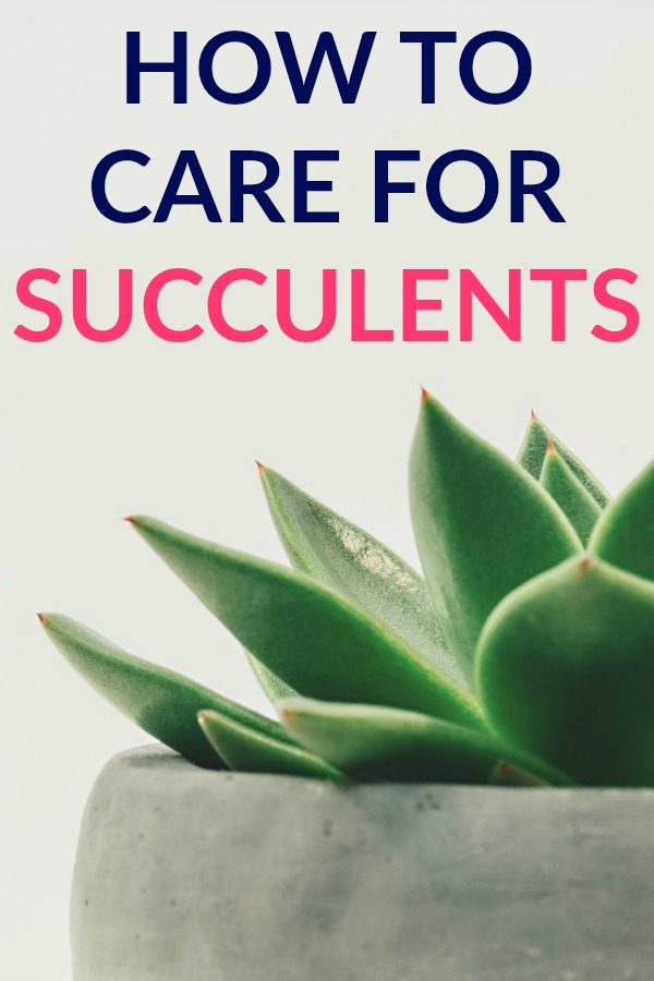 How to Care for Succulents from a Reformed Plant Killer